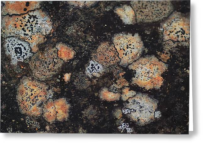 Lichen Abstract Greeting Card by Susan Capuano