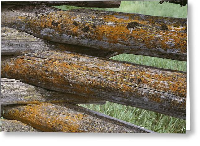 Lichens Growing On A Corral Fence Greeting Card by Stephen Sharnoff