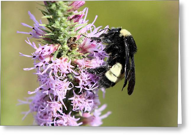 Life Of A Bee Greeting Card by Laura Oakman