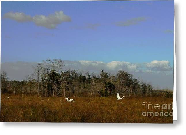 Lifes Field Of Dreams Greeting Card