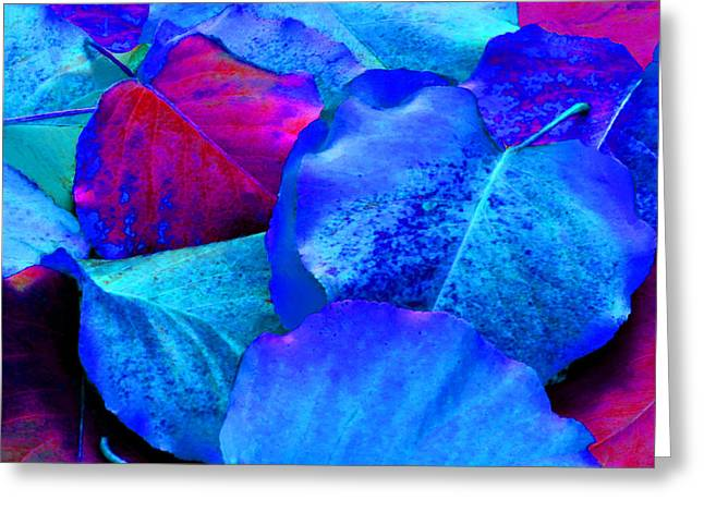 Light Blue And Fuchsia Leaves Greeting Card by Sheila Kay McIntyre