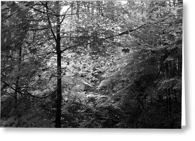 Greeting Card featuring the photograph Light In The Woods by Kathleen Grace