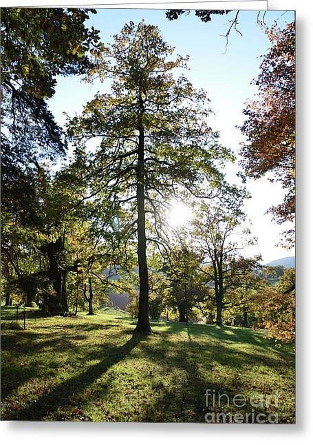Light In Tree Greeting Card by Bruno Santoro