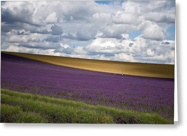 Light On Lavender Greeting Card by Rosie Herbert