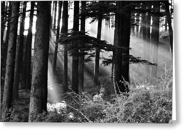 Greeting Card featuring the photograph Light Through The Trees by Don Schwartz