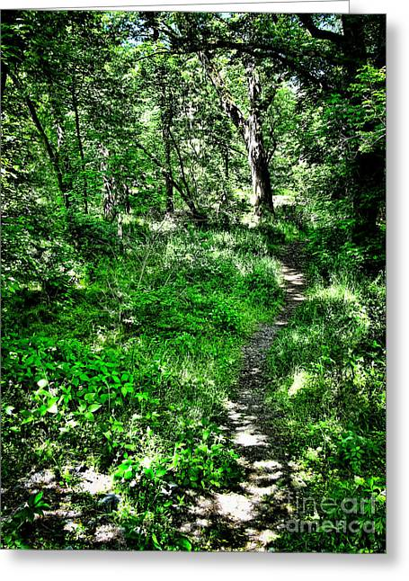 Lighted Path Greeting Card by Colleen Kammerer