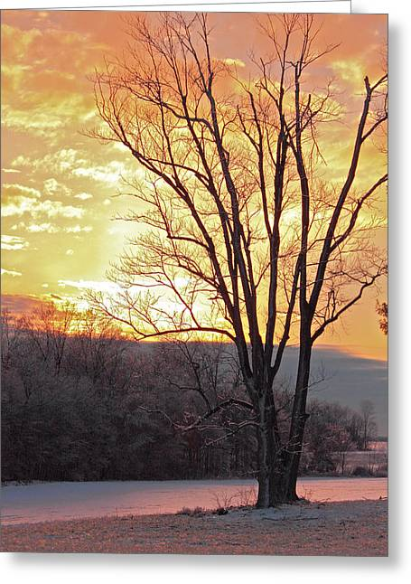 Lighten Up The Sty Greeting Card by Mike Flake