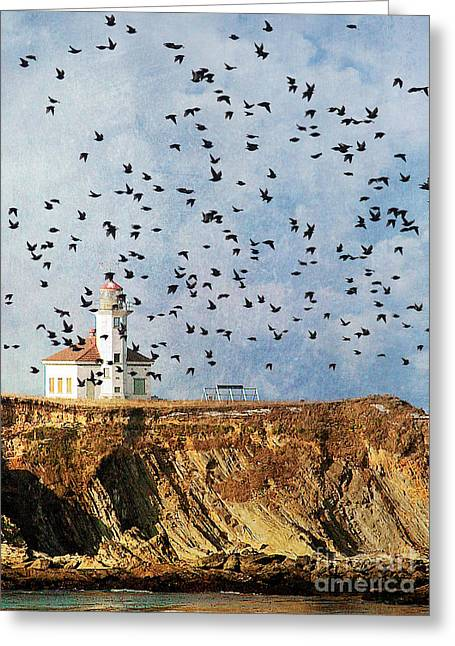 Lighthouse Birds  Greeting Card
