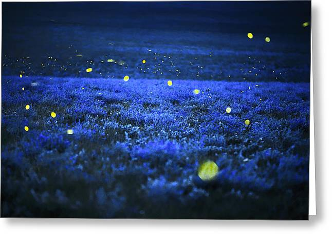 Lightning Bugs And Wild Alfalfa Blanket Greeting Card by Jim Richardson