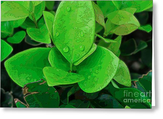 Ligustrum Greeting Card