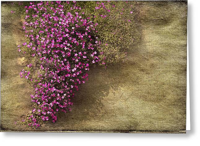 Lilac Branch Greeting Card by Svetlana Sewell
