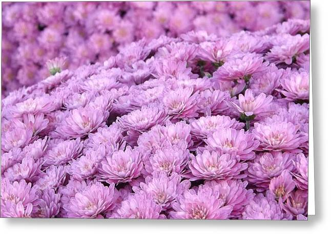Lilac Frost Greeting Card by Elizabeth Sullivan