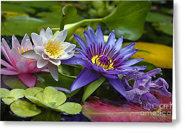 Lilies No. 17 Greeting Card by Anne Klar
