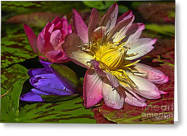 Lilies No. 20 Greeting Card by Anne Klar