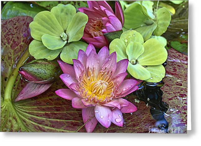 Lilies No. 21 Greeting Card by Anne Klar