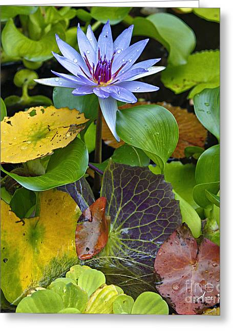 Greeting Card featuring the photograph Lilies No. 24 by Anne Klar
