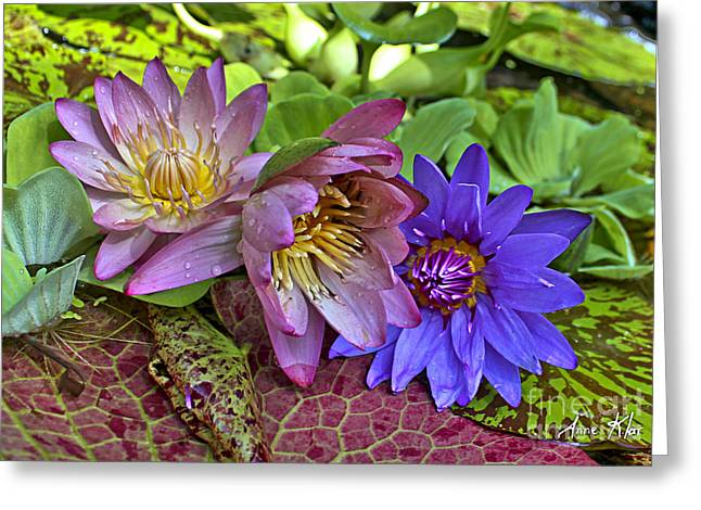 Greeting Card featuring the photograph Lilies No. 29 by Anne Klar