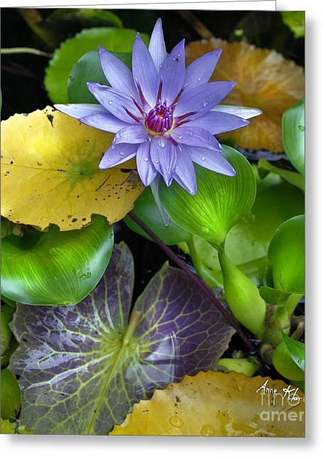 Lilies No. 3 Greeting Card