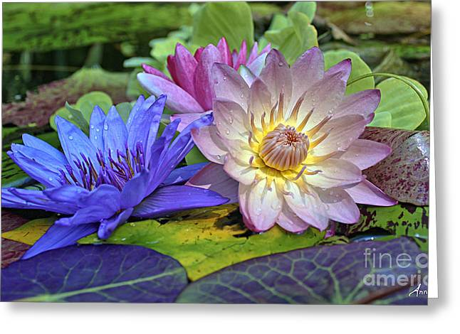 Greeting Card featuring the photograph Lilies No. 30 by Anne Klar