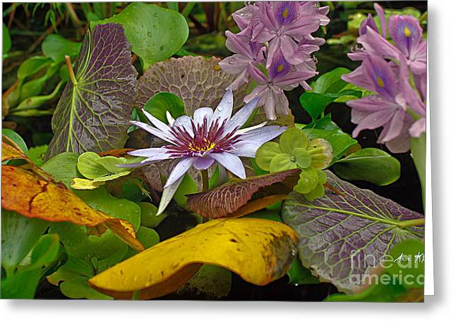 Greeting Card featuring the photograph Lilies No. 35 by Anne Klar