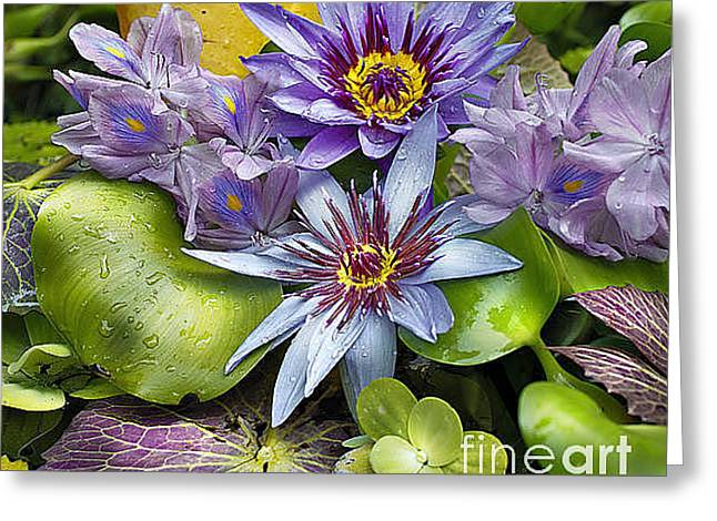 Lilies No. 4 Greeting Card by Anne Klar