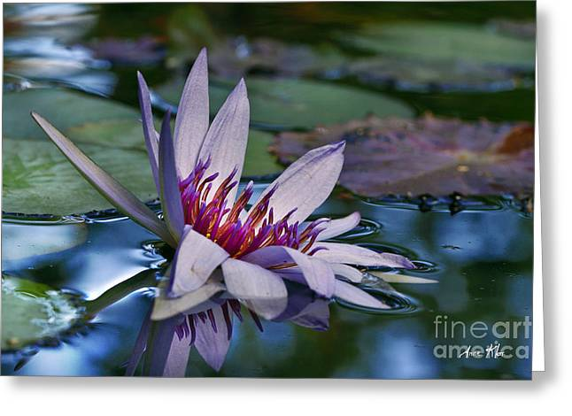 Greeting Card featuring the photograph Lilies No. 40 by Anne Klar