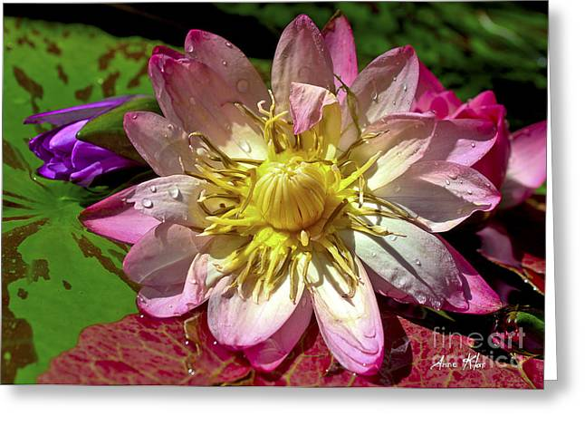 Greeting Card featuring the photograph Lilies No. 42 by Anne Klar