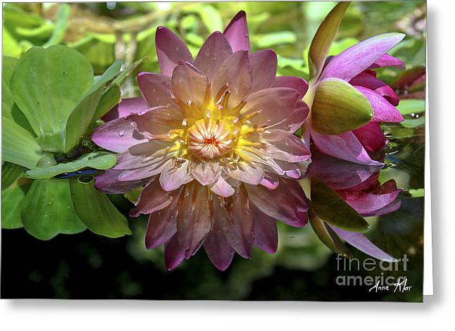 Greeting Card featuring the photograph Lilies No. 43 by Anne Klar