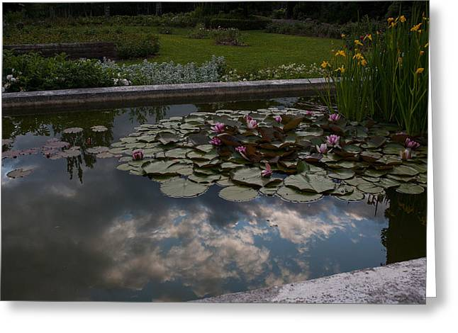Lillies And Clouds Greeting Card by Mike Reid