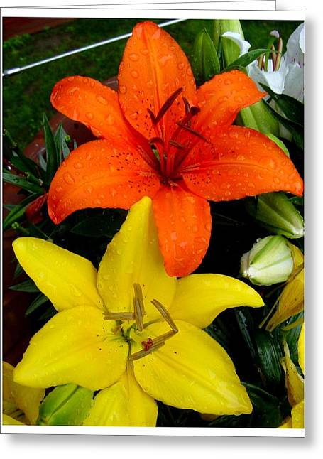 Lillies In Vermont Greeting Card