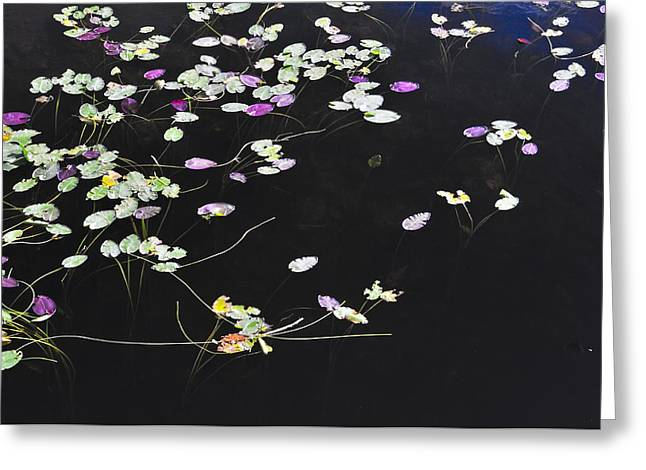 Lilly Pads Greeting Card by Andres LaBrada