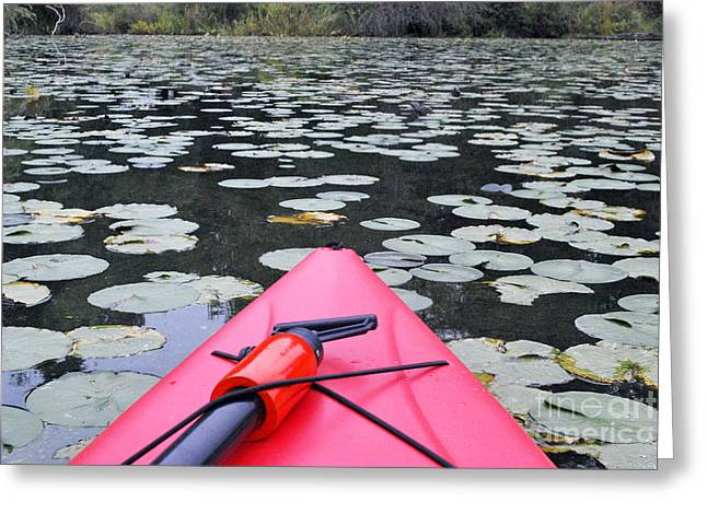 Lilly Pads With Boat Greeting Card by Bill Thomson