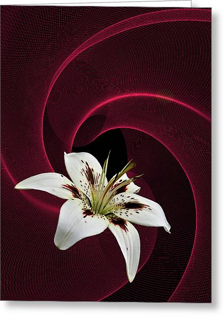 Greeting Card featuring the photograph Lilly White by Judy  Johnson