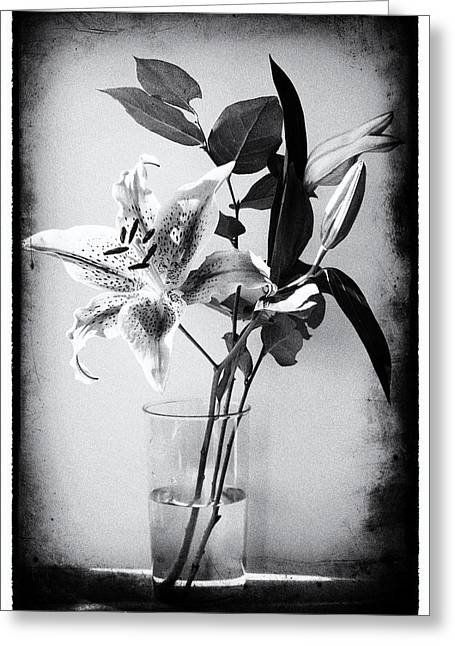 Lily 320bw Greeting Card