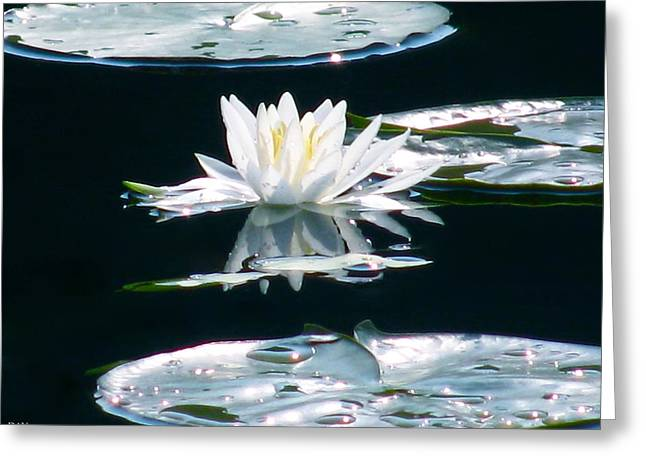 Lily Bliss Greeting Card by Debra     Vatalaro