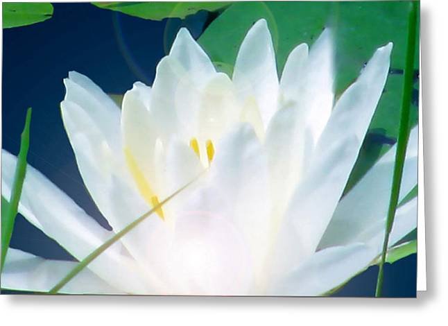 Lily Essence Greeting Card by Debra     Vatalaro