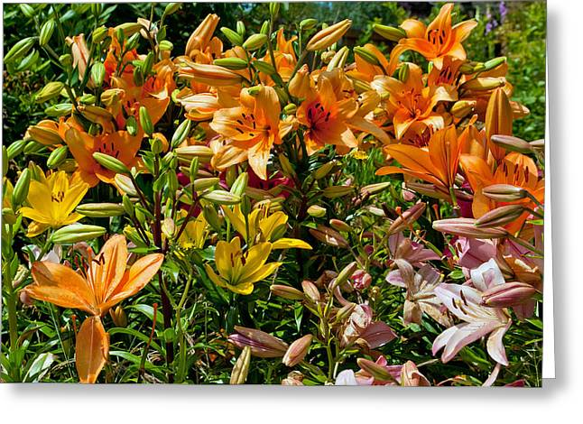 Lily Garden Bouquet  Greeting Card by Tikvah's Hope