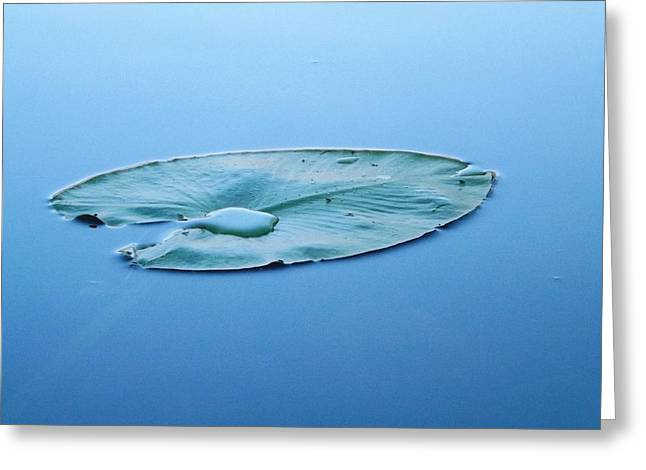 Lily Pad In The Sky Greeting Card
