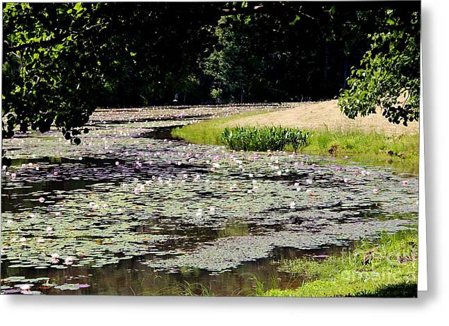 Lily Pad Lake 2 Greeting Card by Pauline Ross