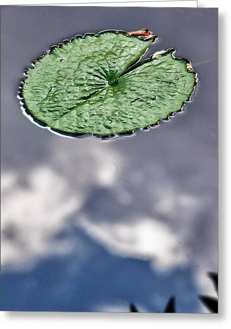 Lily Pad Greeting Card by Robert Ullmann