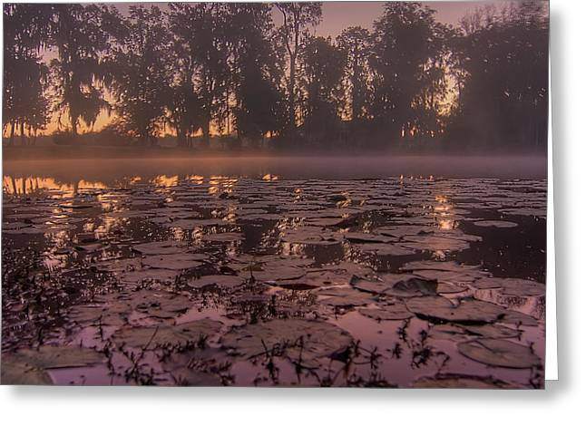 Greeting Card featuring the photograph Lily Pads In The Fog by Dan Wells