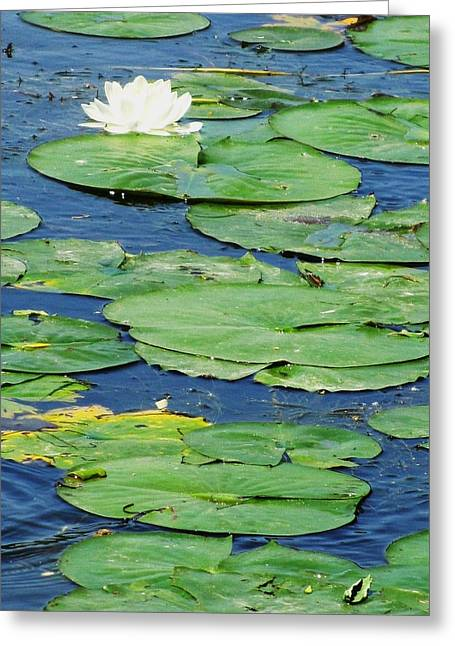 Lily Pads-two Greeting Card by Todd Sherlock