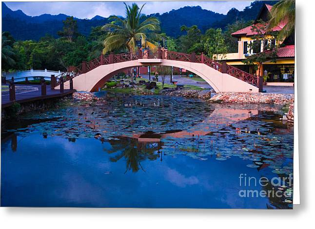 Lily Pond At Sunset Greeting Card