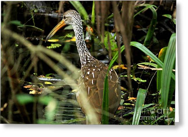 Limpkin Greeting Card by Theresa Willingham