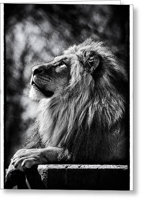 Lion Meditating Greeting Card