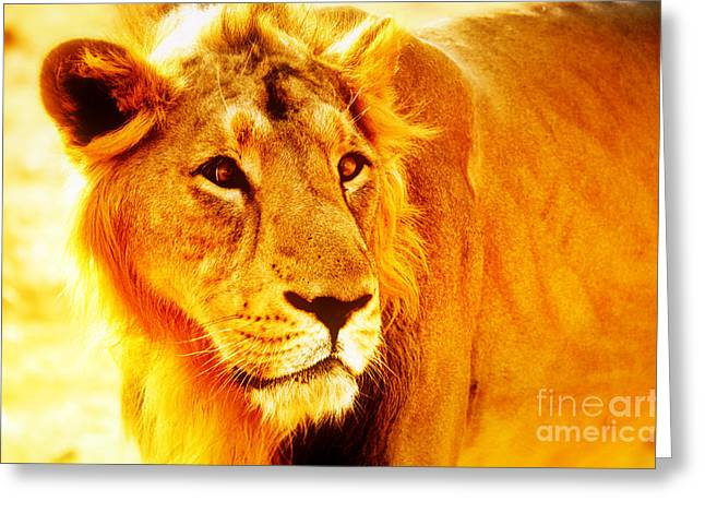 Lion Greeting Card by Nilay Tailor