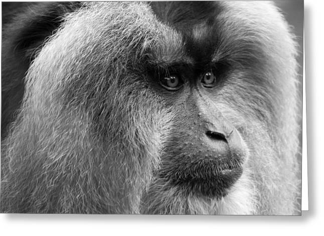 Lion-tailed Macaque Greeting Card