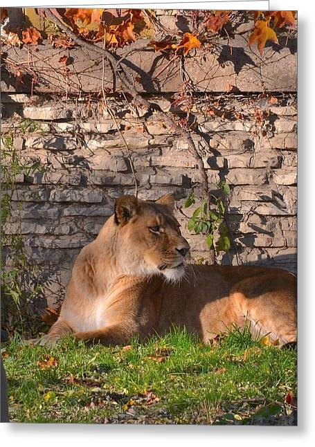 lion Territory Greeting Card
