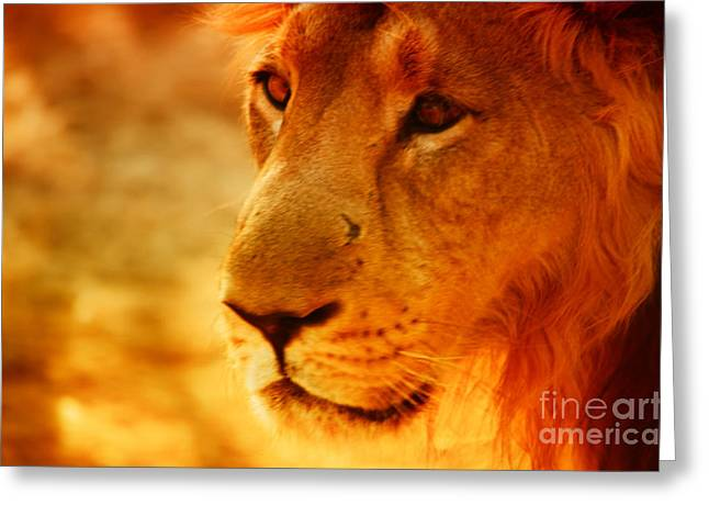 Lion The King Greeting Card by Nilay Tailor