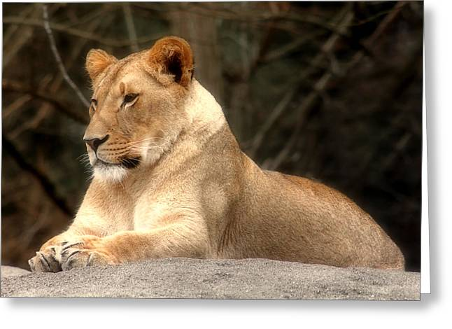 Lioness - Queen Of The Jungle Greeting Card